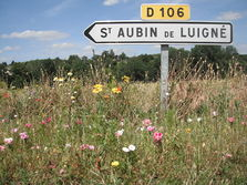Saint-Aubin-de-Luigné en photos